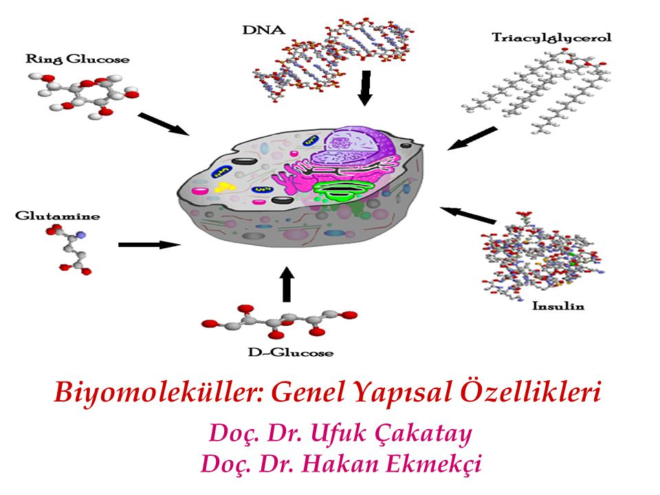 Vücudumuzda Dört Ana Grup Biyomolekül Bulunur BiyomolekülÖrnekMajör Element Major Fonksiyonu Karbonhidrat (I)GlikojenC, H, OEnerji Depolama Protein (II)AlbuminC, H, O, N Regülasyon, Transport Nükleik Asit (III)DNA, RNAC, H, O, N, P Enformasyon Depolama Lipit (Yağ, (IV) steroidler) TrigliseridC, H, O,Energy Depolama Bu dört ana biyomolekül grubu dışında ayrıca glikoproteinler, proteoglikanlar, lipoproteinler ve fosfolipidler gibi daha kompleks biyomoleküller de vucutta yer alır