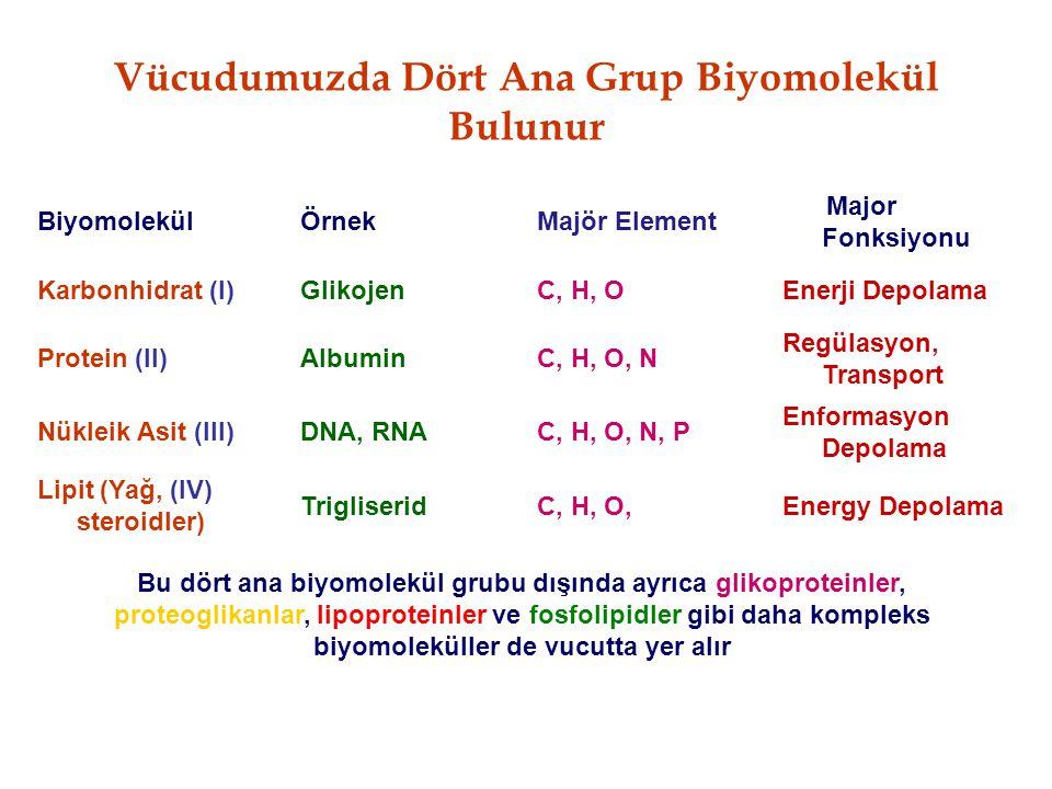 Vücudumuzda Dört Ana Grup Biyomolekül Bulunur BiyomolekülÖrnekMajör Element Major Fonksiyonu Karbonhidrat (I)GlikojenC, H, OEnerji Depolama Protein (I