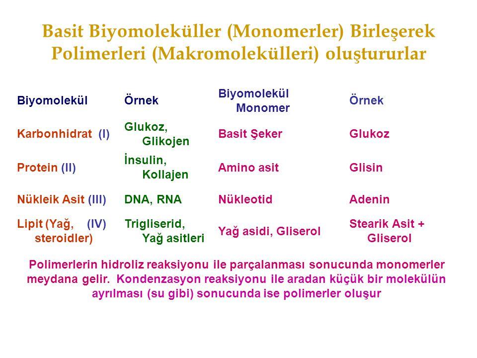 Basit Biyomoleküller (Monomerler) Birleşerek Polimerleri (Makromolekülleri) oluştururlar BiyomolekülÖrnek Biyomolekül Monomer Örnek Karbonhidrat (I) G