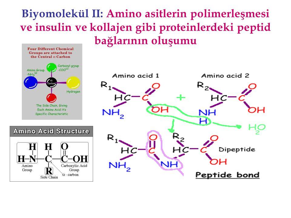 Biyomolekül II: Amino asitlerin polimerleşmesi ve insulin ve kollajen gibi proteinlerdeki peptid bağlarının oluşumu
