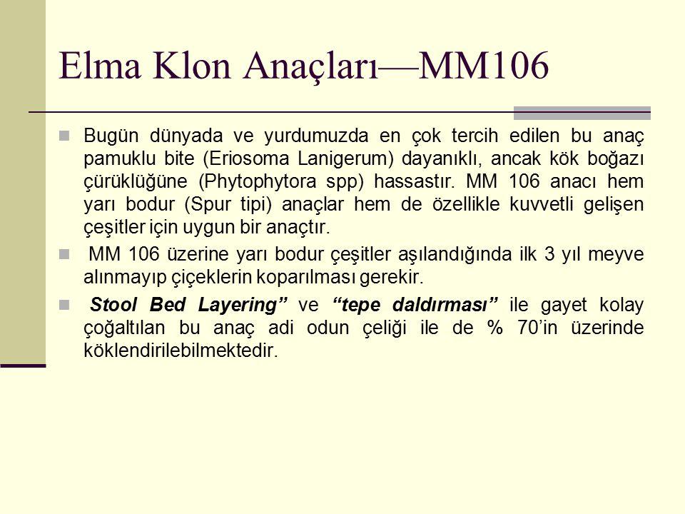 Elma Klon Anaçları—MM106 Bugün dünyada ve yurdumuzda en çok tercih edilen bu anaç pamuklu bite (Eriosoma Lanigerum) dayanıklı, ancak kök boğazı çürükl
