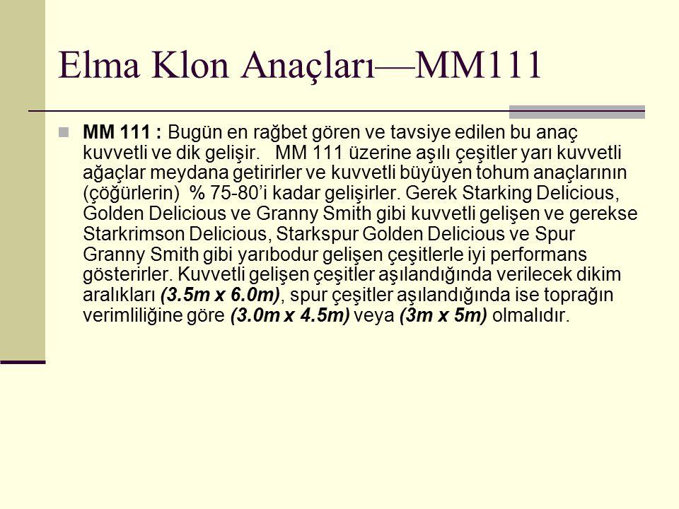 Elma Klon Anaçları—MM111 MM 111 : Bugün en rağbet gören ve tavsiye edilen bu anaç kuvvetli ve dik gelişir. MM 111 üzerine aşılı çeşitler yarı kuvvetli