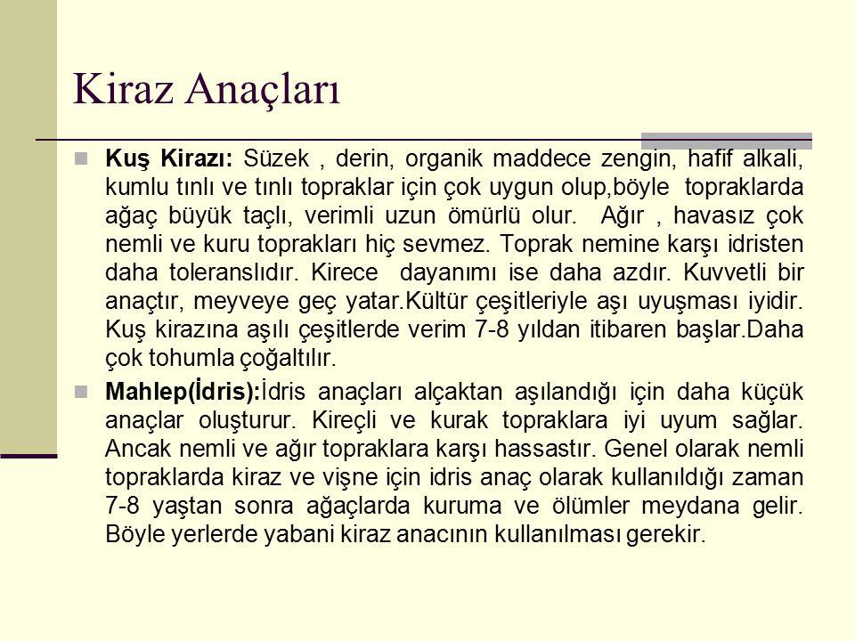 Kiraz Anaçları Mazzard F 12/1 : Yabani kiraz (Prunus avium)' dan seleksiyon yolu ile elde edilmiştir.