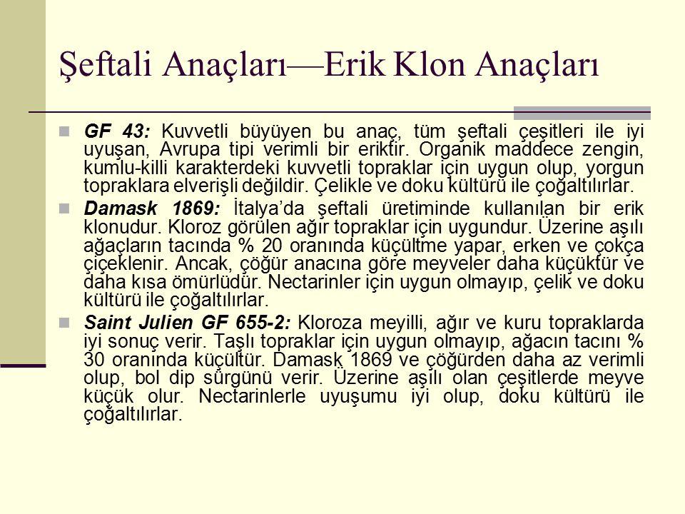 Şeftali Anaçları—Erik Klon Anaçları GF 43: Kuvvetli büyüyen bu anaç, tüm şeftali çeşitleri ile iyi uyuşan, Avrupa tipi verimli bir eriktir. Organik ma