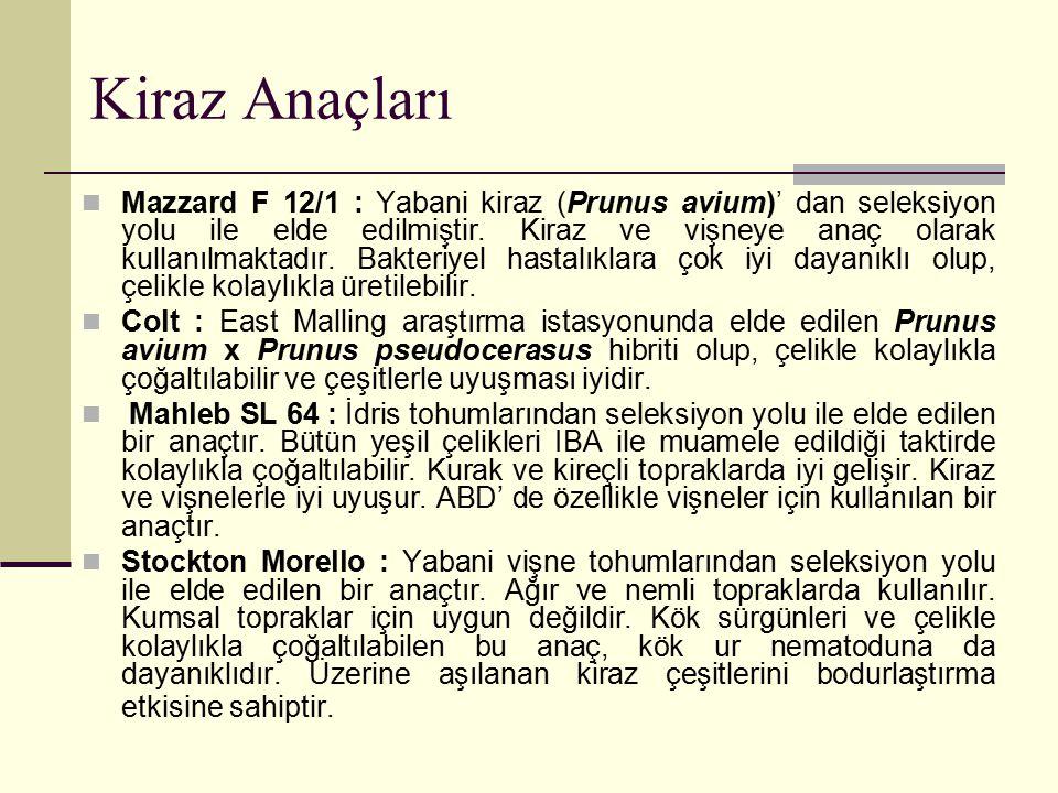 Kiraz Anaçları Mazzard F 12/1 : Yabani kiraz (Prunus avium)' dan seleksiyon yolu ile elde edilmiştir. Kiraz ve vişneye anaç olarak kullanılmaktadır. B