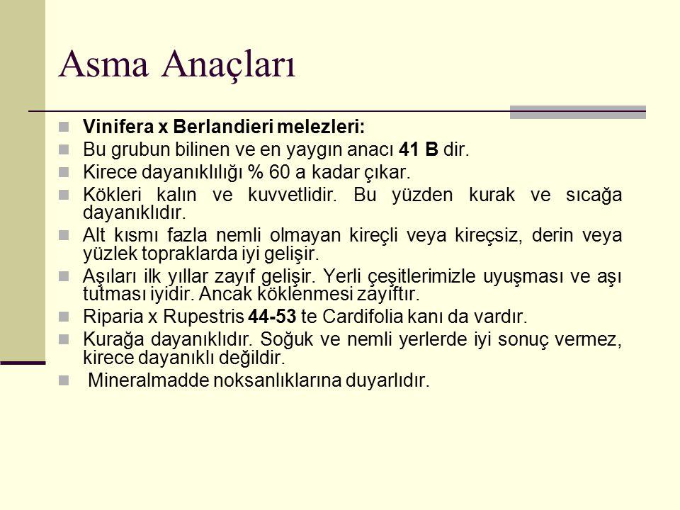 Asma Anaçları Vinifera x Berlandieri melezleri: Bu grubun bilinen ve en yaygın anacı 41 B dir. Kirece dayanıklılığı % 60 a kadar çıkar. Kökleri kalın