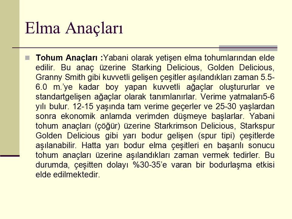 Elma Anaçları Tohum Anaçları :Yabani olarak yetişen elma tohumlarından elde edilir. Bu anaç üzerine Starking Delicious, Golden Delicious, Granny Smith