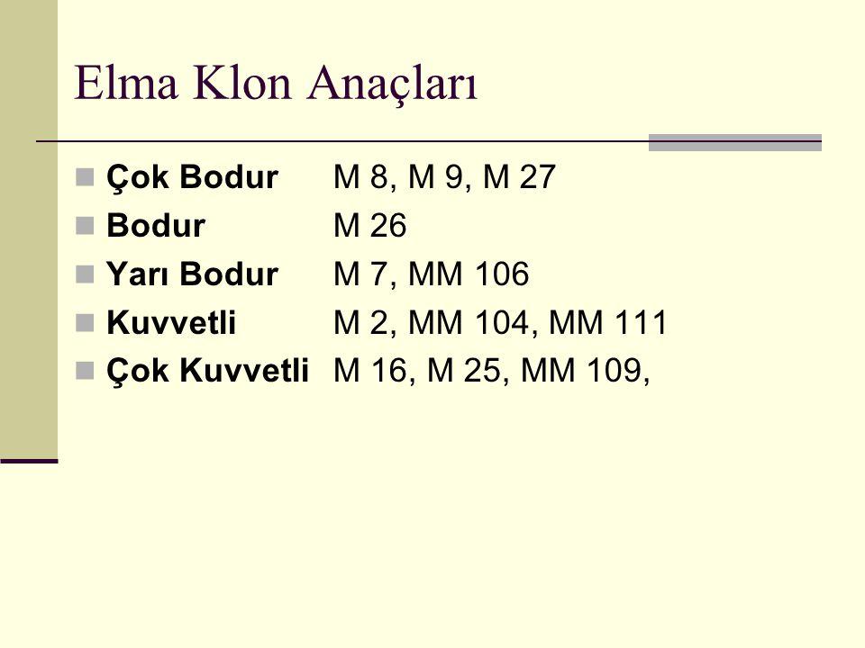 Elma Klon Anaçları Çok Bodur M 8, M 9, M 27 Bodur M 26 Yarı Bodur M 7, MM 106 Kuvvetli M 2, MM 104, MM 111 Çok Kuvvetli M 16, M 25, MM 109,