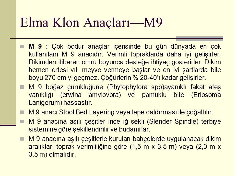 Elma Klon Anaçları—M9 M 9 : Çok bodur anaçlar içerisinde bu gün dünyada en çok kullanılanı M 9 anacıdır. Verimli topraklarda daha iyi gelişirler. Diki