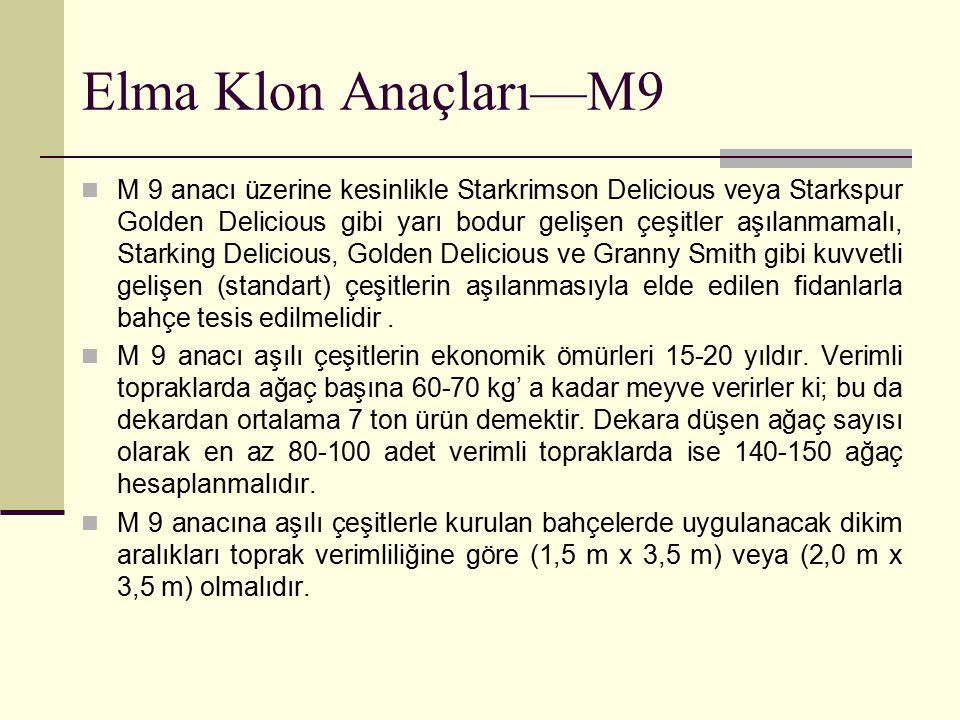 Elma Klon Anaçları—M9 M 9 anacı üzerine kesinlikle Starkrimson Delicious veya Starkspur Golden Delicious gibi yarı bodur gelişen çeşitler aşılanmamalı