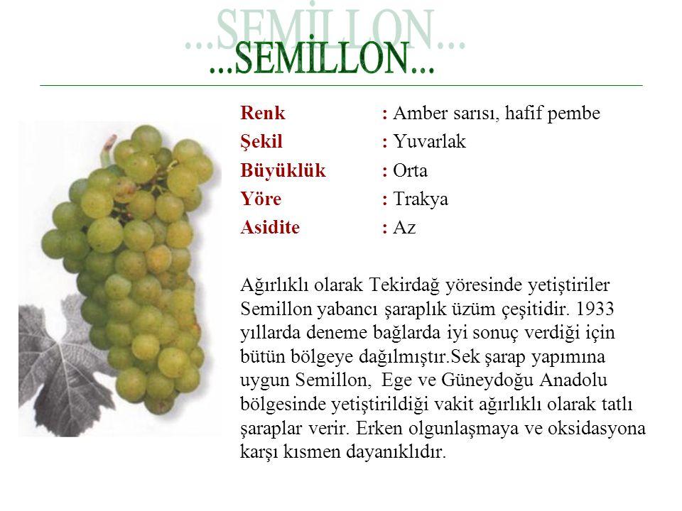 Renk : Amber sarısı, hafif pembe Şekil : Yuvarlak Büyüklük : Orta Yöre : Trakya Asidite : Az Ağırlıklı olarak Tekirdağ yöresinde yetiştiriler Semillon yabancı şaraplık üzüm çeşitidir.