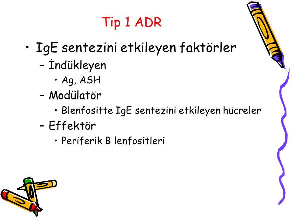 Tip 1 ADR IgE sentezini etkileyen faktörler –İndükleyen Ag, ASH –Modülatör Blenfositte IgE sentezini etkileyen hücreler –Effektör Periferik B lenfosit