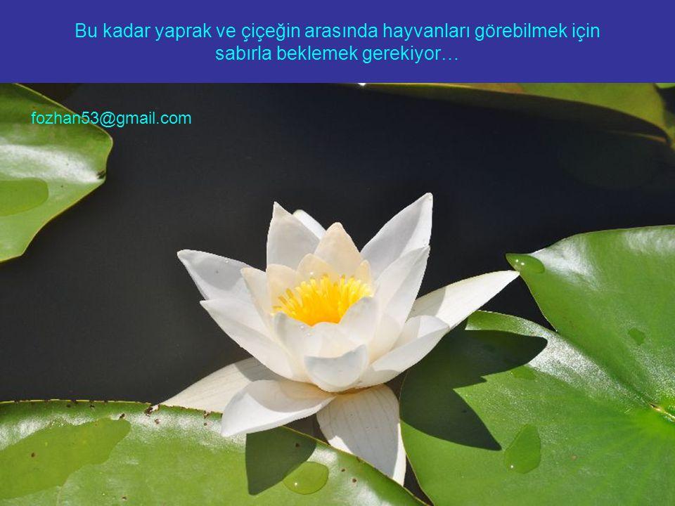 Bu kadar yaprak ve çiçeğin arasında hayvanları görebilmek için sabırla beklemek gerekiyor… fozhan53@gmail.com