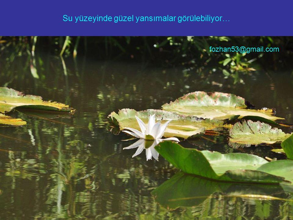 Su yüzeyinde güzel yansımalar görülebiliyor… fozhan53@gmail.com