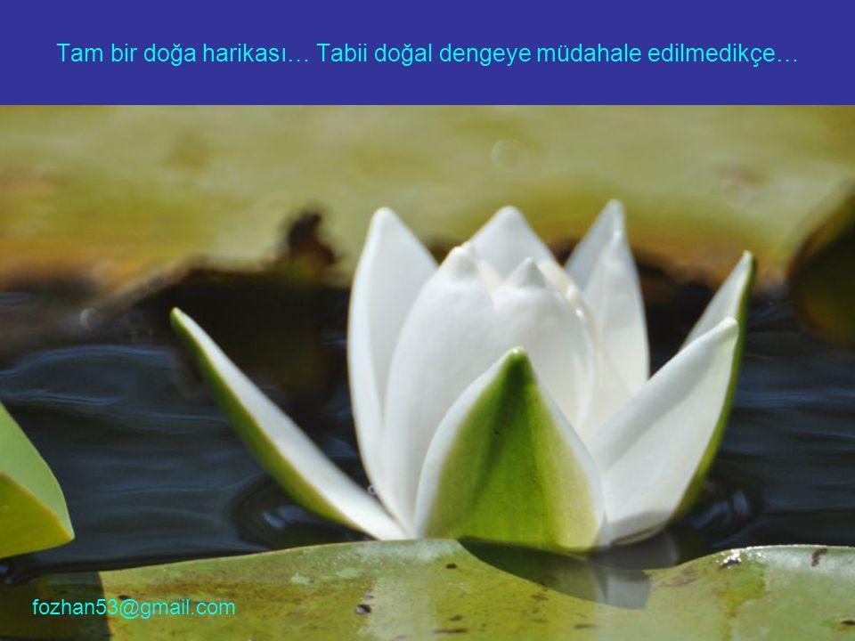 Tam bir doğa harikası… Tabii doğal dengeye müdahale edilmedikçe… fozhan53@gmail.com