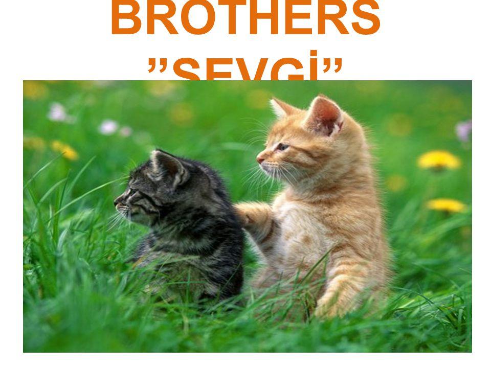 "BROTHERS ""SEVGİ"""