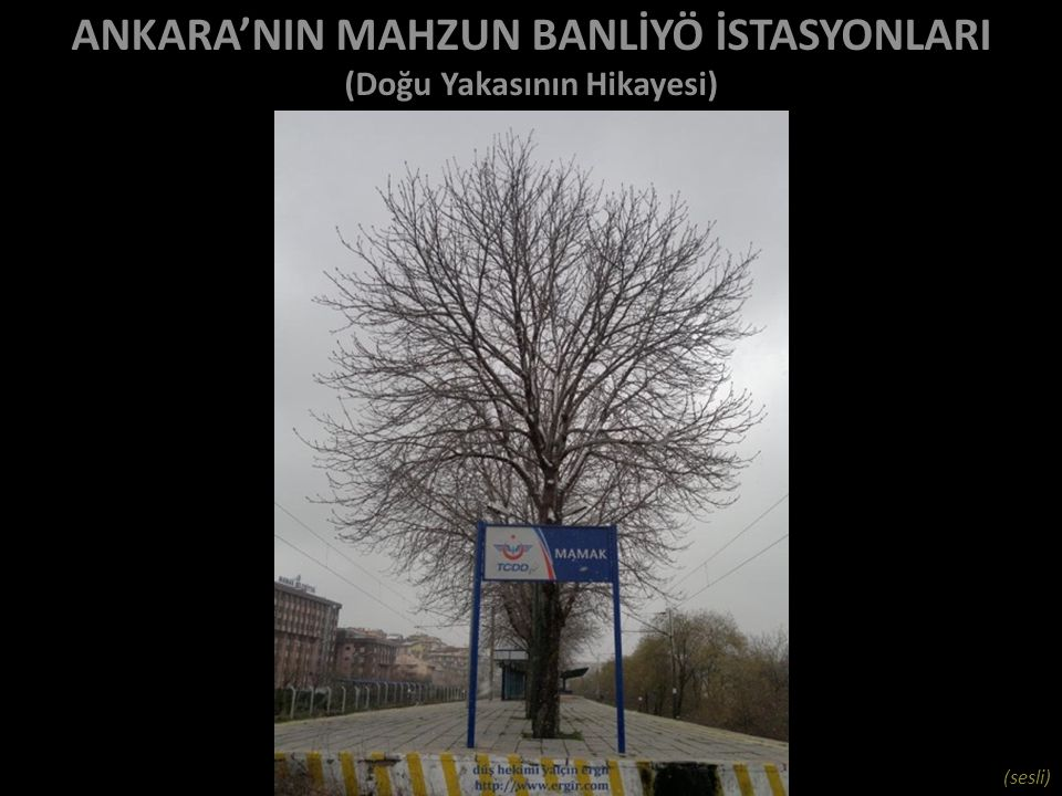 bekliyoruz… bu fotoğraflar Yenişehir'den Kayaş'a adım adım rayların, traverslerin üzerinde yürüyerek, kırma taşlara gömülerek, dar yerlerde arkadan tren gelmeden koşarak çekilmiştir – raylarda para ezilmemiştir… düş hekimi yalçın ergir http://www.ergir.comhttp://www.ergir.com düz yazı: http://www.ergir.com/2013/ankaranin_mahzun_banliyo_istasyonlari_dy.htm http://www.ergir.com/2013/ankaranin_mahzun_banliyo_istasyonlari_dy.htm müzik: yeni türkü, 'derman tema 4' (sonbahardan çizgiler)/ film müzikleri (buğdayın türküsü, yeşilmişik, koleksiyon 2)