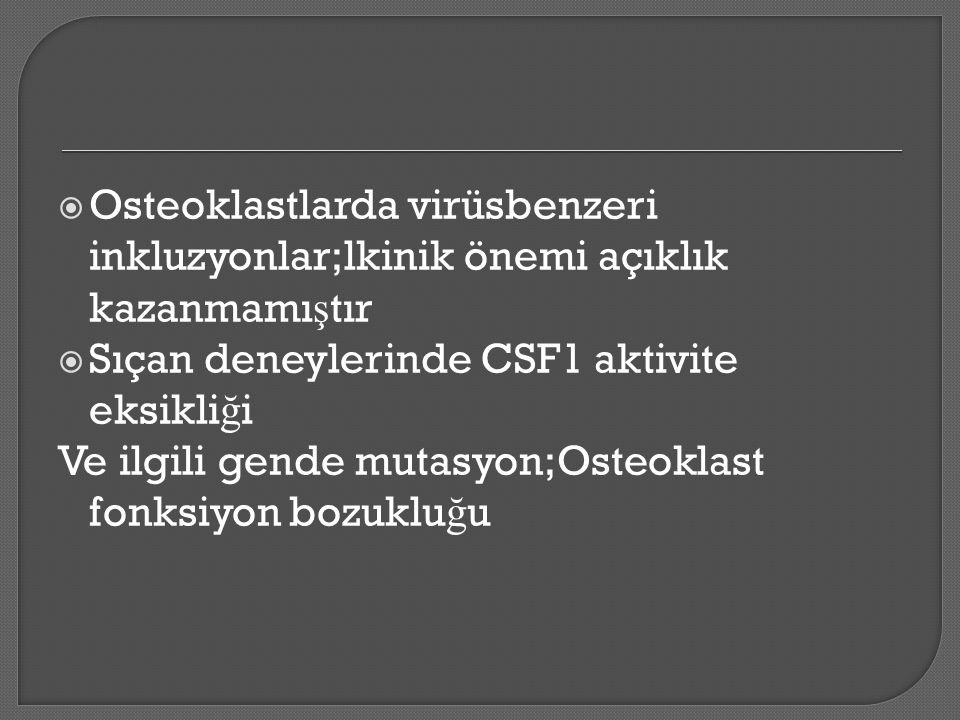  Osteoklastlarda virüsbenzeri inkluzyonlar;lkinik önemi açıklık kazanmamı ş tır  Sıçan deneylerinde CSF1 aktivite eksikli ğ i Ve ilgili gende mutasyon;Osteoklast fonksiyon bozuklu ğ u