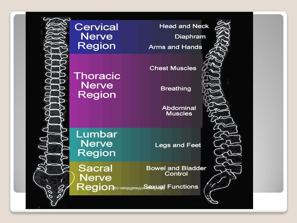 Elle kafanın nötral pozisyon verilmesi Traksiyon uygulamadan kafanın servikal vertebralar üzerindeki ağırlığı kalkacak şekilde hafifçe tutulur.
