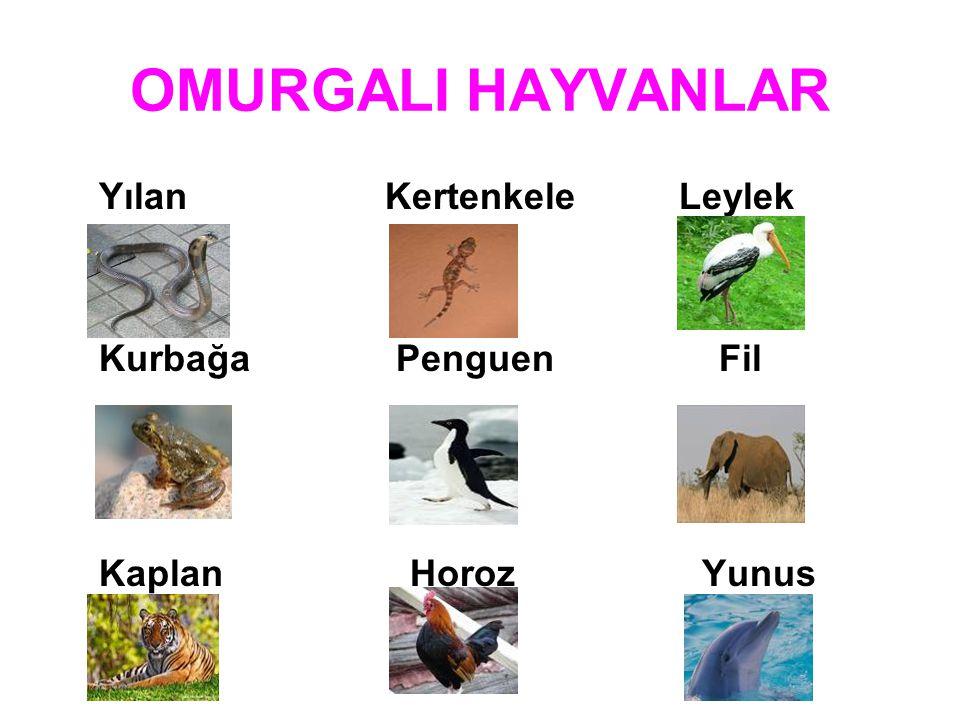 OMURGALI HAYVANLAR Yılan Kertenkele Leylek Kurbağa Penguen Fil Kaplan Horoz Yunus