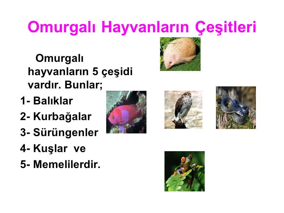Omurgalı Hayvanların Çeşitleri Omurgalı hayvanların 5 çeşidi vardır. Bunlar; 1- Balıklar 2- Kurbağalar 3- Sürüngenler 4- Kuşlar ve 5- Memelilerdir.