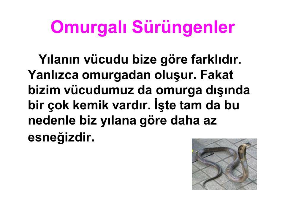 Omurgalı Sürüngenler Kertenkele de yılan gibi omurgalı sürüngenlerden biridir.Omurgası vardır.