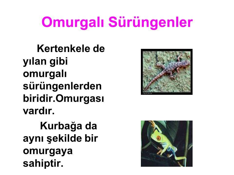 Omurgalı Sürüngenler Kertenkele de yılan gibi omurgalı sürüngenlerden biridir.Omurgası vardır. Kurbağa da aynı şekilde bir omurgaya sahiptir.