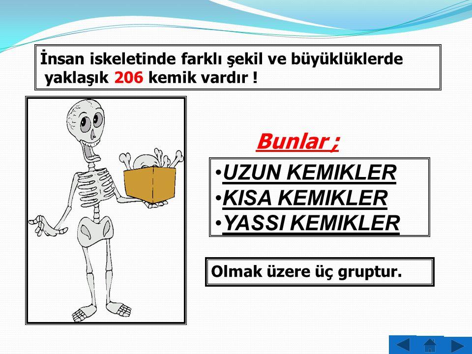 DÜŞÜNELİM!!! Bir insan iskeletinde kaç kemik bulunur?