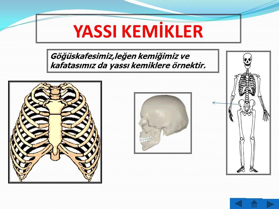 KISA KEMİKLER Ellerimizde, ayaklarımızda ve omurgamızda bulunan kemikler kısa kemiklerdendir.