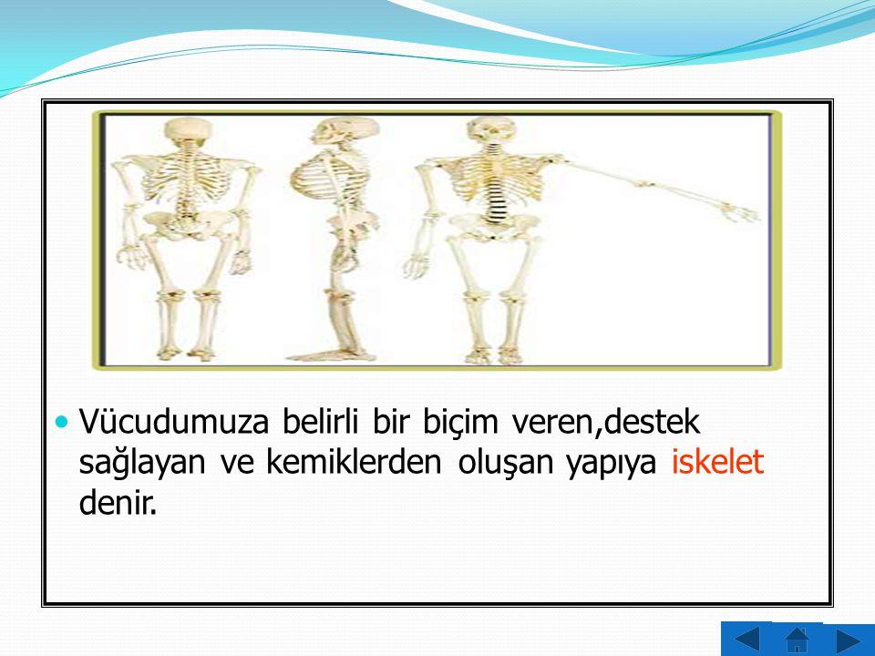 İnsan iskeletinde farklı şekil ve büyüklüklerde yaklaşık 206 kemik vardır .