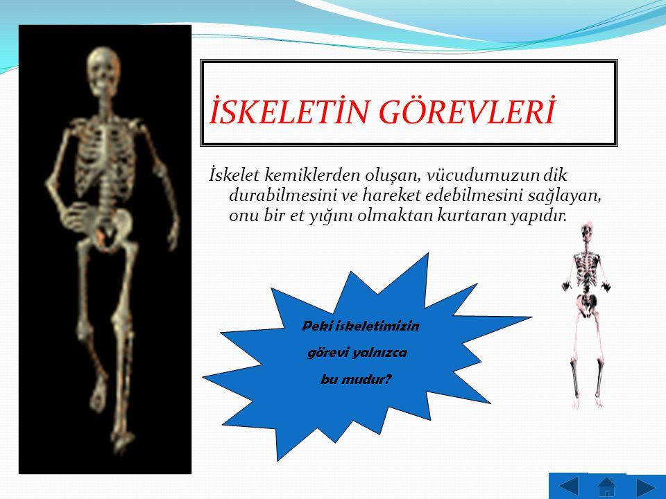 Vücudumuza belirli bir biçim veren,destek sağlayan ve kemiklerden oluşan yapıya iskelet denir.