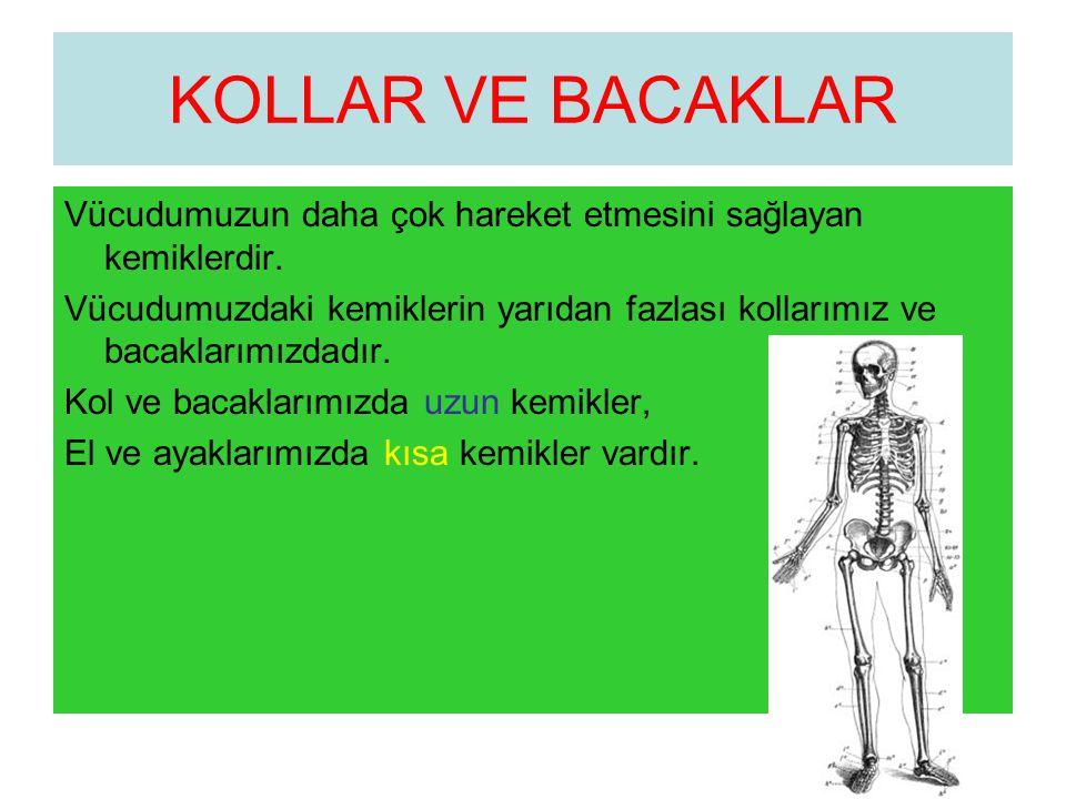 KOLLAR VE BACAKLAR Vücudumuzun daha çok hareket etmesini sağlayan kemiklerdir. Vücudumuzdaki kemiklerin yarıdan fazlası kollarımız ve bacaklarımızdadı