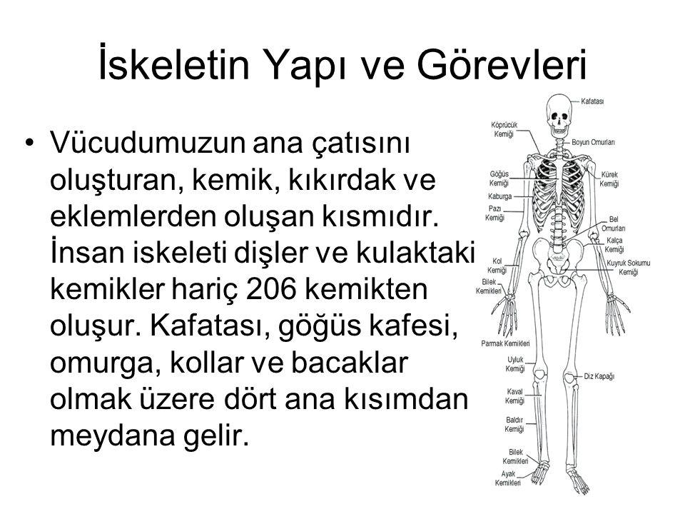 İskeletin Yapı ve Görevleri Vücudumuzun ana çatısını oluşturan, kemik, kıkırdak ve eklemlerden oluşan kısmıdır. İnsan iskeleti dişler ve kulaktaki kem