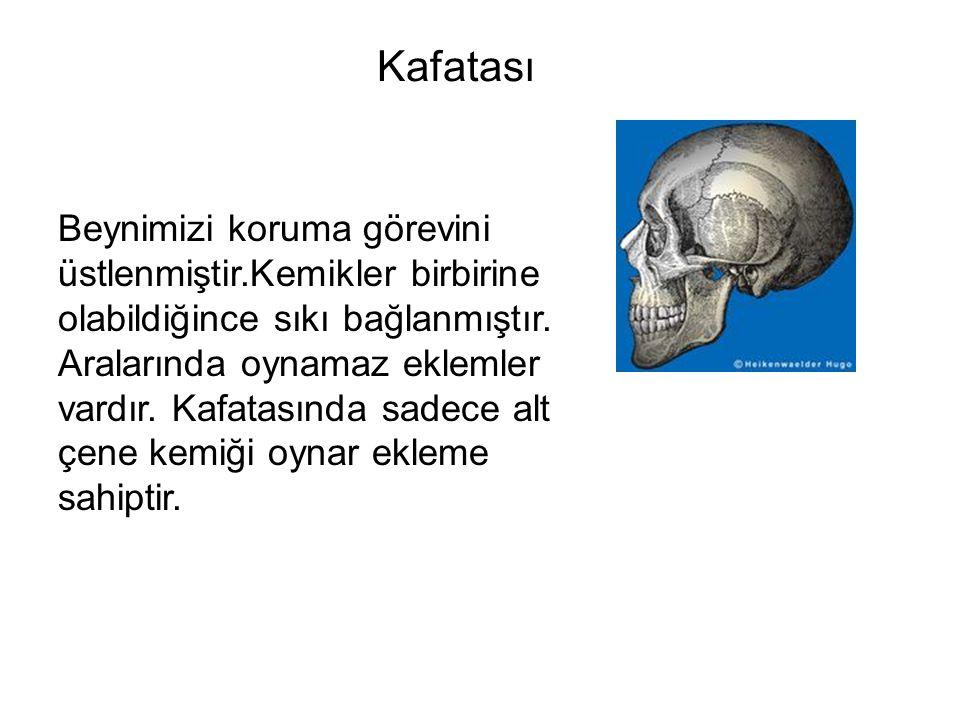 Kafatası Beynimizi koruma görevini üstlenmiştir.Kemikler birbirine olabildiğince sıkı bağlanmıştır. Aralarında oynamaz eklemler vardır. Kafatasında sa