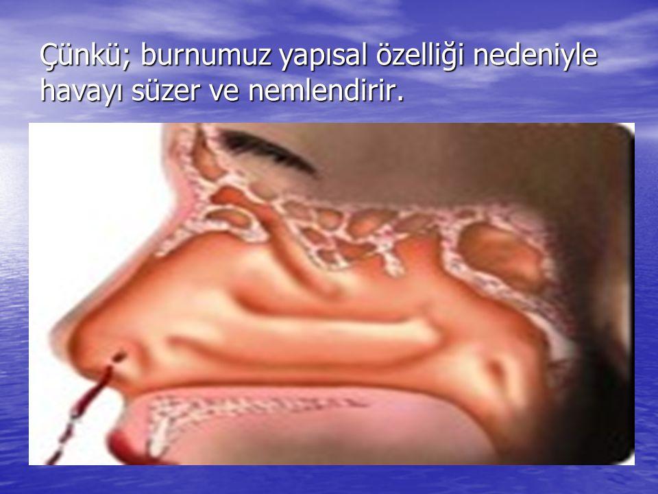 Çünkü; burnumuz yapısal özelliği nedeniyle havayı süzer ve nemlendirir.