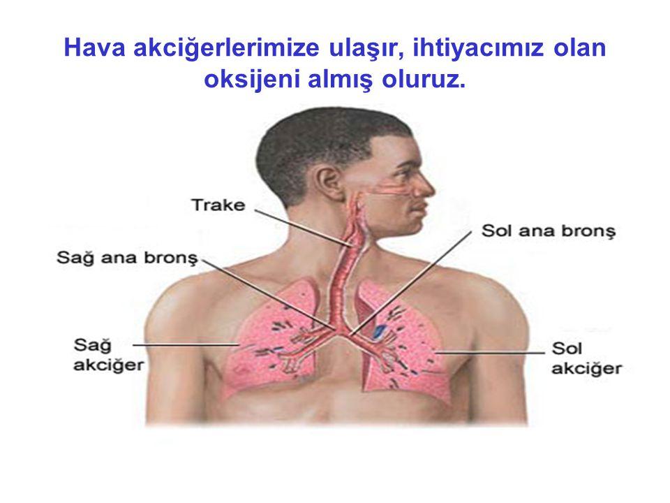 Hava akciğerlerimize ulaşır, ihtiyacımız olan oksijeni almış oluruz.