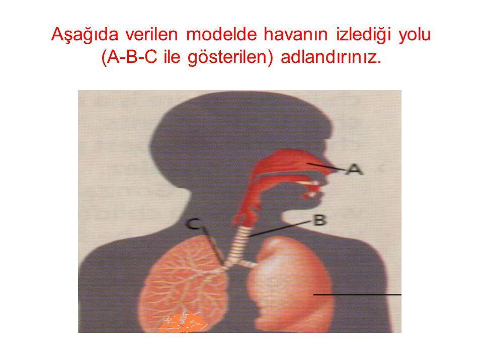 Aşağıda verilen modelde havanın izlediği yolu (A-B-C ile gösterilen) adlandırınız.
