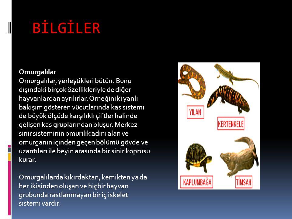 BİLGİLER Omurgalılar Omurgalılar, yerleştikleri bütün. Bunu dışındaki birçok özellikleriyle de diğer hayvanlardan ayrılırlar. Örneğin iki yanlı bakışı