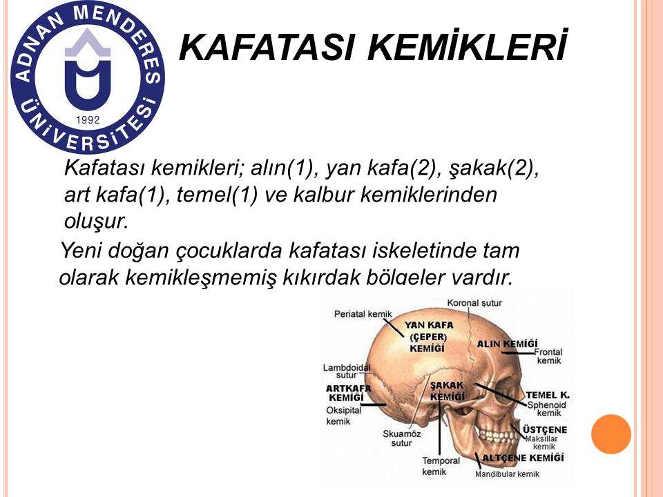 KAFATASI KEMİKLERİ Kafatası kemikleri; alın(1), yan kafa(2), şakak(2), art kafa(1), temel(1) ve kalbur kemiklerinden oluşur. Yeni doğan çocuklarda kaf