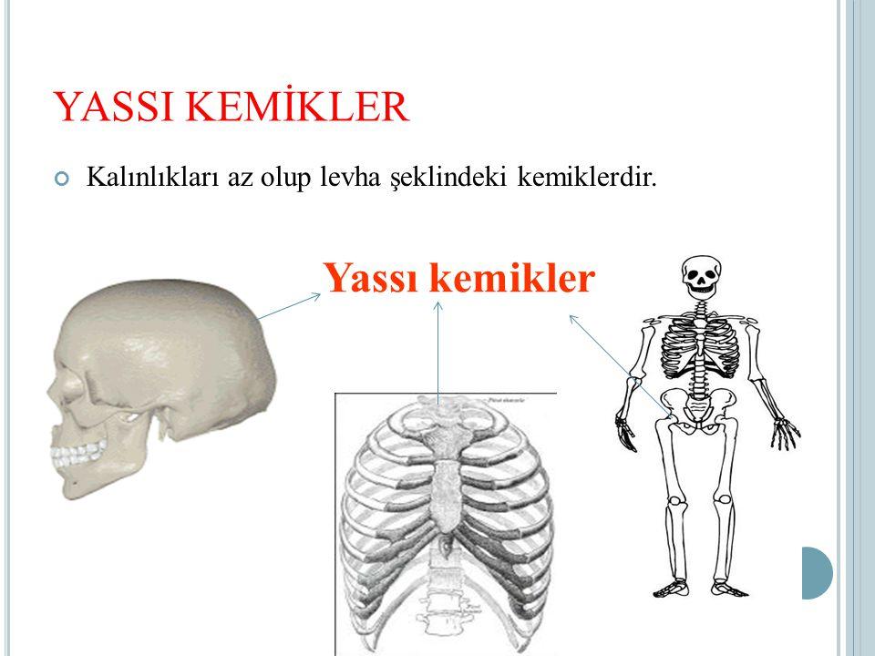 YASSI KEMİKLER Kalınlıkları az olup levha şeklindeki kemiklerdir. Yassı kemikler