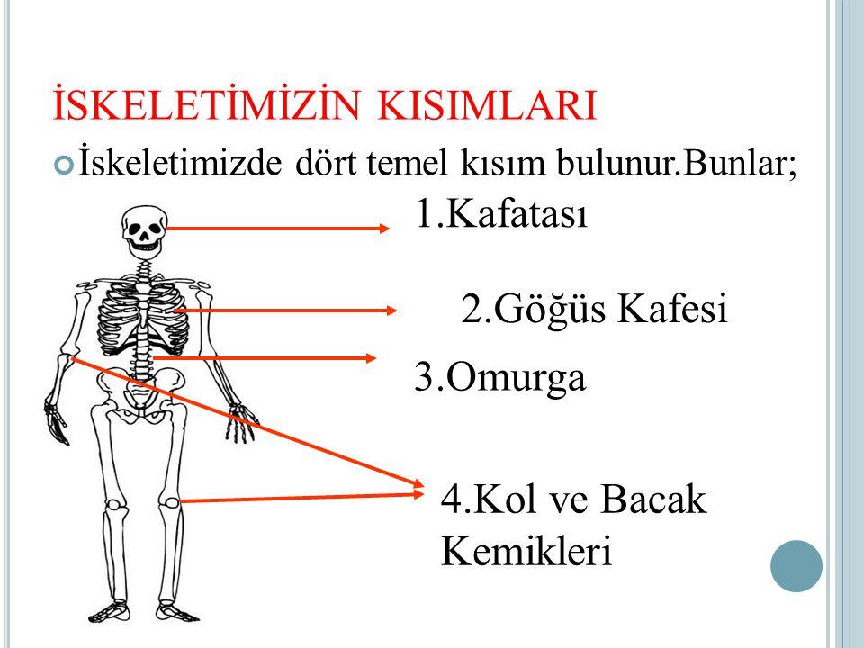 İSKELETİMİZİN KISIMLARI İskeletimizde dört temel kısım bulunur.Bunlar; 1.Kafatası 2.Göğüs Kafesi 3.Omurga 4.Kol ve Bacak Kemikleri