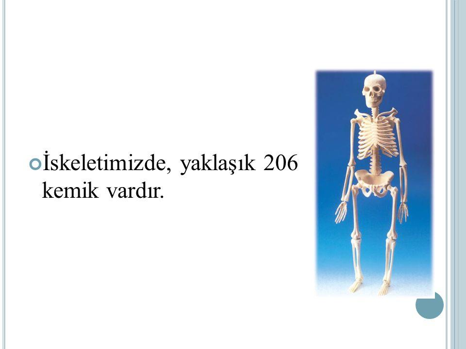 KEMİK ÇEŞİTLERİ Sert bir yapıya sahip olan kemikler şekil ve büyüklüklerine göre üç çeşittir.Bunlar; Uzun Kemikler Kısa Kemikler Yassı Kemikler