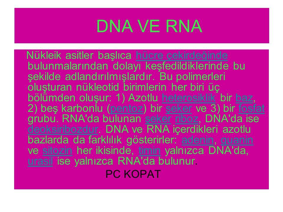 DNA VE RNA Nükleik asitler başlıca hücre çekirdeğinde bulunmalarından dolayı keşfedildiklerinde bu şekilde adlandırılmışlardır.