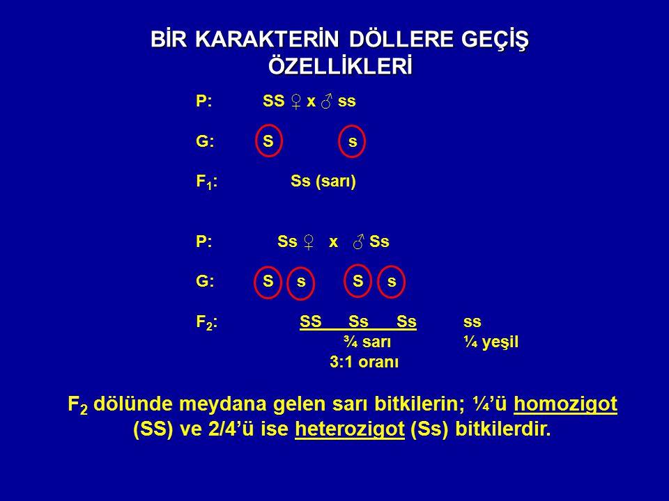 BİR KARAKTERİN DÖLLERE GEÇİŞ ÖZELLİKLERİ P:SS ♀ x ♂ ss G: S s F 1 : Ss (sarı) P: Ss ♀ x ♂ Ss G: S s S s F 2 : SS SsSsss ¾ sarı ¼ yeşil 3:1 oranı F 2 d