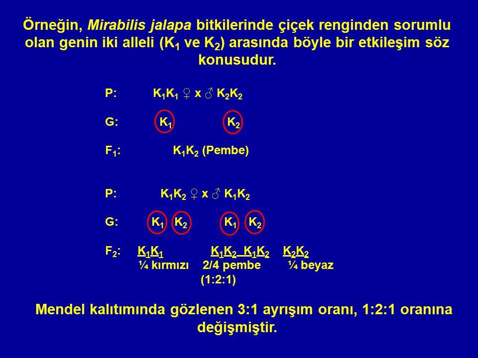 Örneğin, Mirabilis jalapa bitkilerinde çiçek renginden sorumlu olan genin iki alleli (K 1 ve K 2 ) arasında böyle bir etkileşim söz konusudur. P:K 1 K