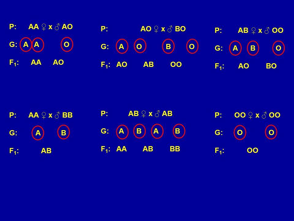 P: AA ♀ x ♂ AO G: A A O F 1 : AA AO P: AA ♀ x ♂ BB G: A B F 1 : AB P: AO ♀ x ♂ BO G: A O BO F 1 : AO AB OO P: AB ♀ x ♂ AB G: A B A B F 1 : AA AB BB P: