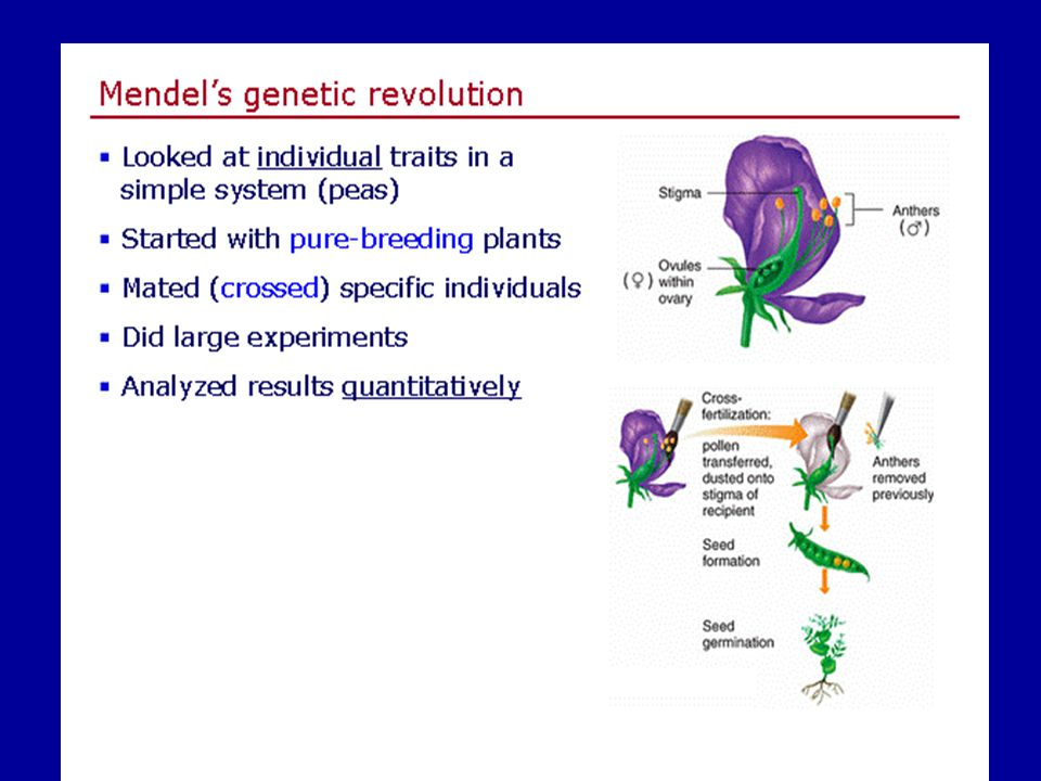 Slide4 of 17 Genetics home page netics home page
