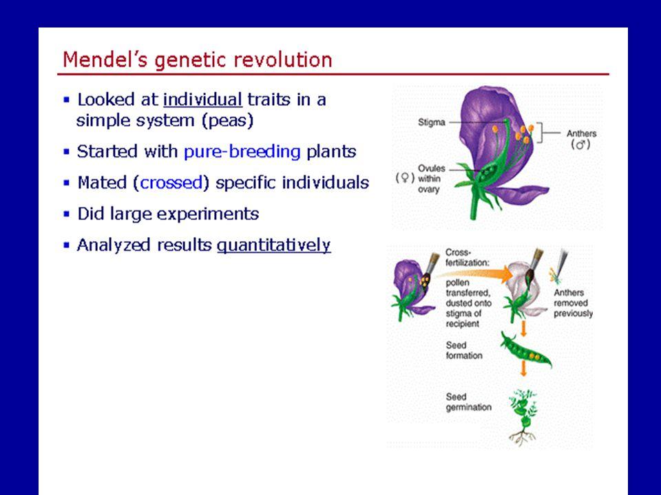 De Vries, Correns ve Tschermark, ayrı ayrı yaptıkları çalışmalardaki bulgularıyla Mendel'in görüşlerinin tam olarak doğrulamışlardır.