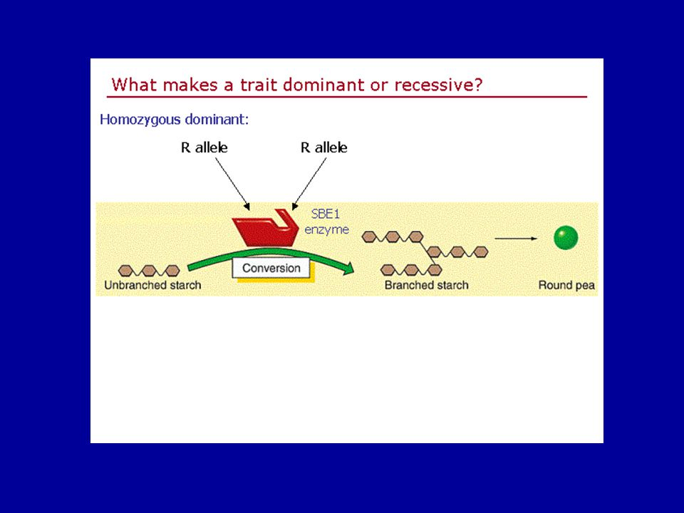 Slide1 of 21 Genetics home page netics home page