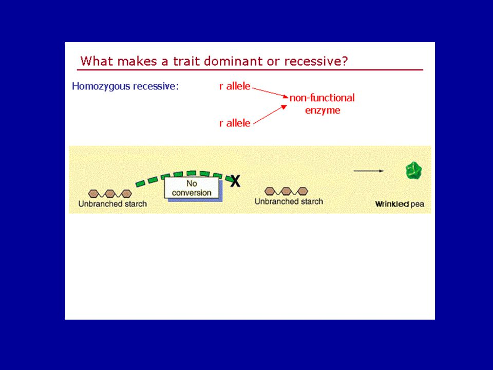 Slide3 of 21 Genetics home page netics home page